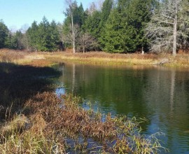 H88 - VERY PRIVATE!  PONDS, STREAM...GREAT FOR HUNTING!  207 ACRES