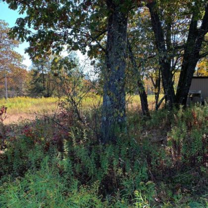 H23 -The site of a home site, the well is still there and the remnants of a septic system.